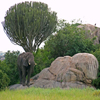 Jigsaw: Serengeti